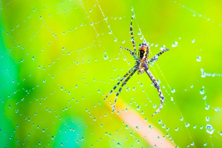 ספיידרמן, איש העכביש גרסת המאקרו